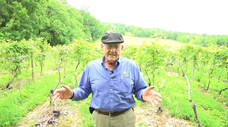 A Brief History of Finger Lakes Vineyards