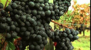 Discover the Wines of Bordeaux