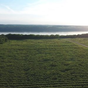 The Finger Lakes Wine Region of New York State