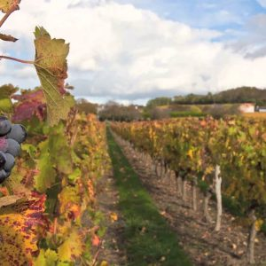 Wine's Cool--Class 2: Intro to Terroir and Classification