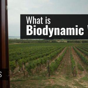 What is Biodynamic Wine? (Is it Organic?)